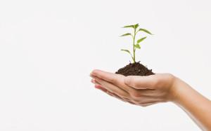 Umwelt und Bildung